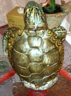 my turtle 1