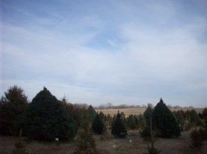 Rustic PInes Tree Farm